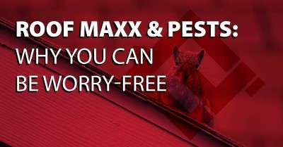 Roof Maxx & Pests: Why You Can Be Worry-Free